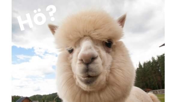 Lahm nicht Lama